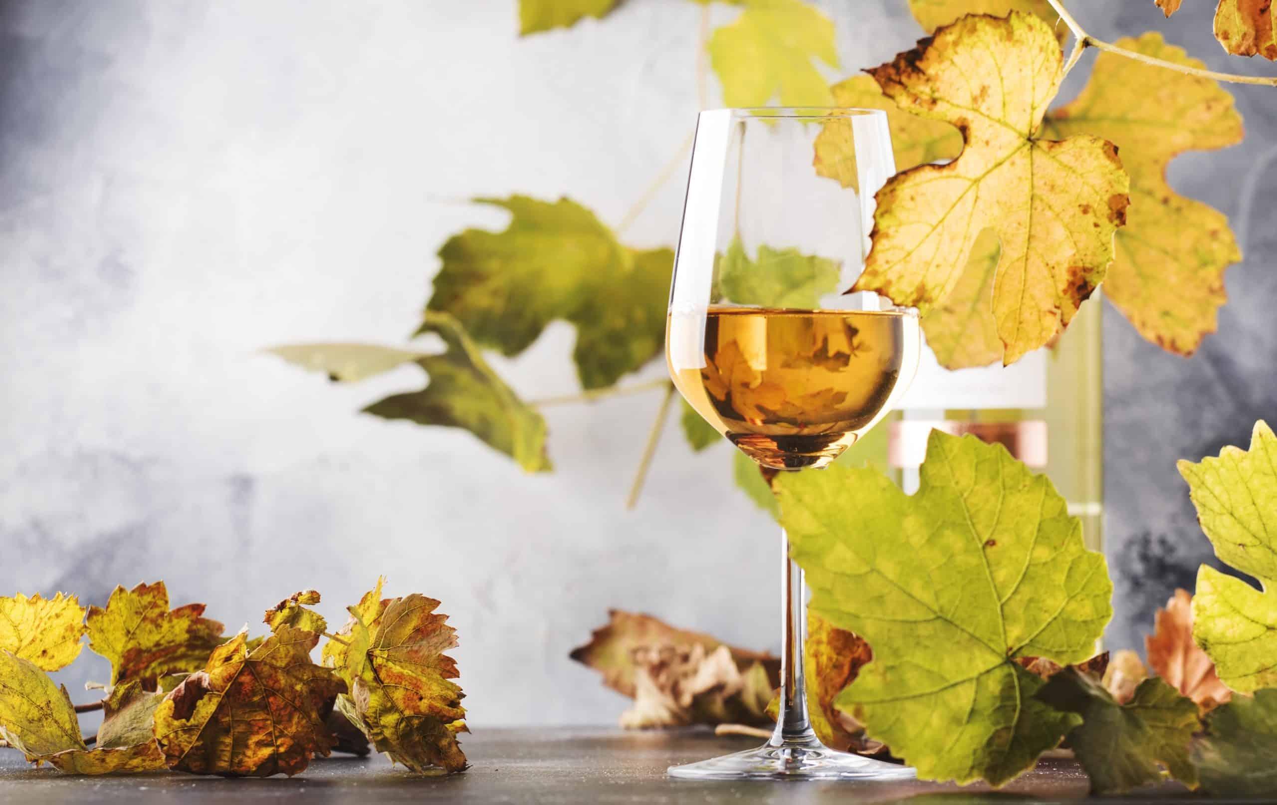 Bijzondere wijnen voor een redelijke prijs